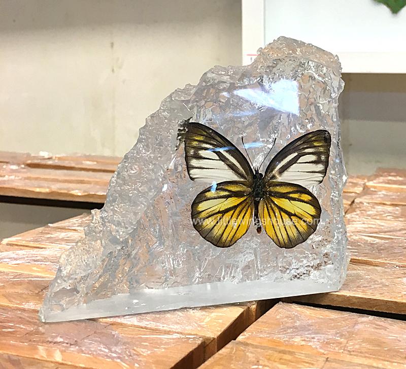 ++ ที่ทับกระดาษ ผีเสื้อสต๊าฟในเรซิ่น ทรงเลียนแบบก้อนหิน (The Rock) ++