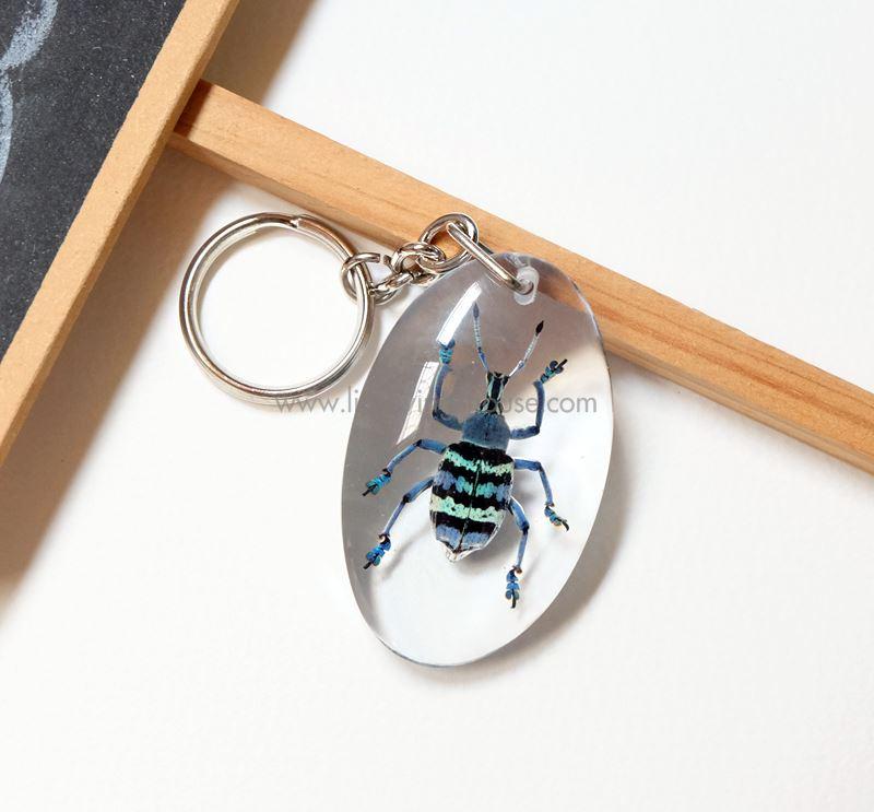 ++ พวงกุญแจ ด้วงงวงสีฟ้า (เข้ม) Eupholus sp. // แมลงนำเข้าจากหมู่เกาะนิวกินี ++