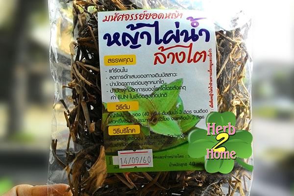 หญ้าไผ่น้ำ (40 กรัม) สมุนไพรแก้ร้อนใน สรรพคุณล้างไต