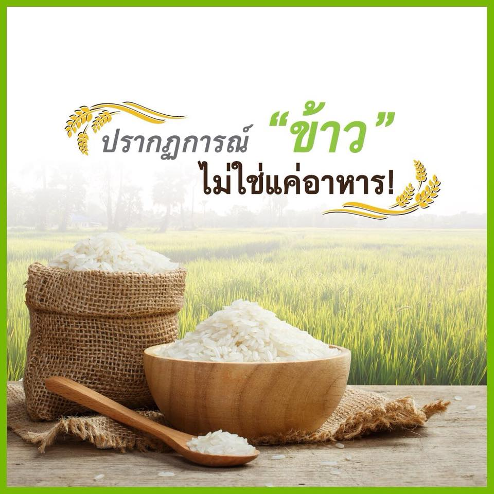 ครีมรวงข้าว จากข้าวไทย