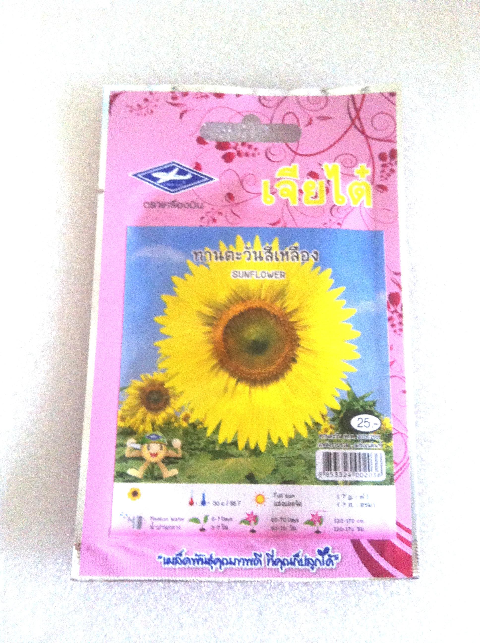 ดอกทานตะวันสีเหลือง Sun flower เจียใต๋